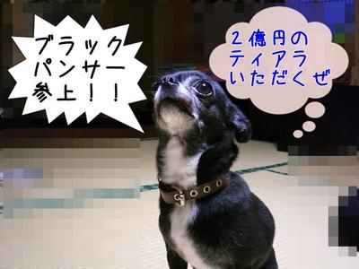 たねちゃん1.JPG