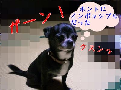 たねちゃん5.JPG